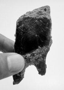 Fossile d'écailles de poisson du Crétacé