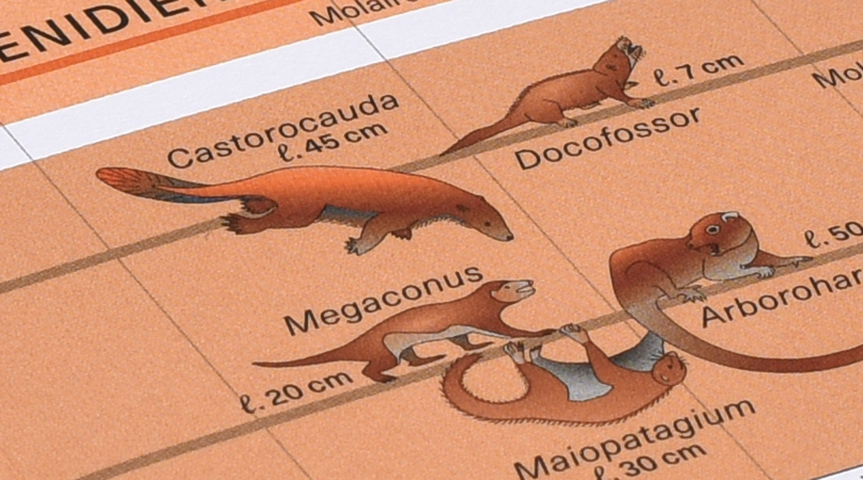 Planche 10 de l'Atlas des vertébrés présentant le castorcauda.
