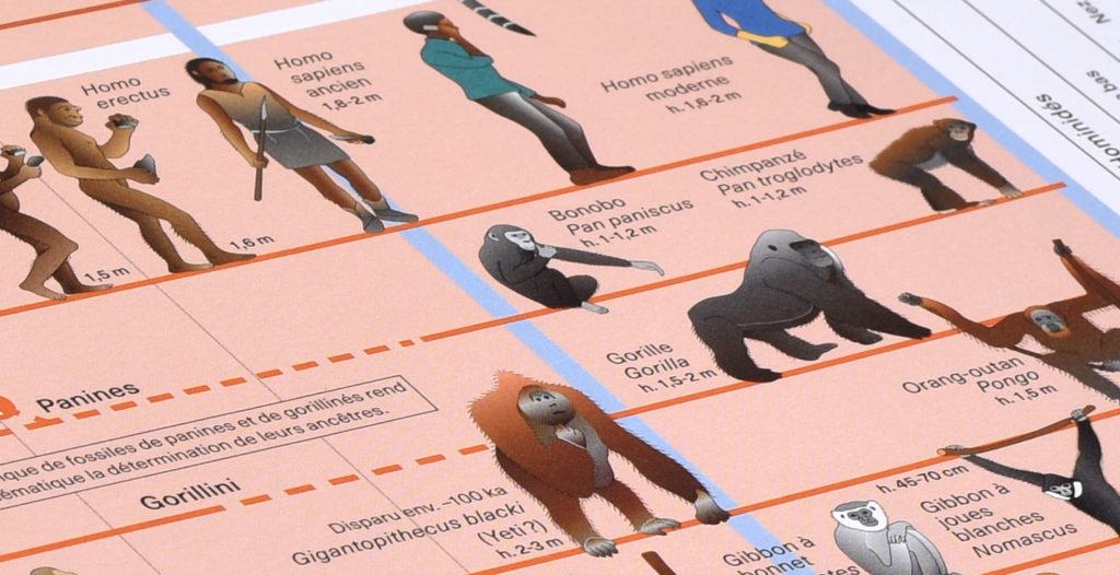 Planche 12 de l'Atlas des vertébrés présentant le gigantopithecus