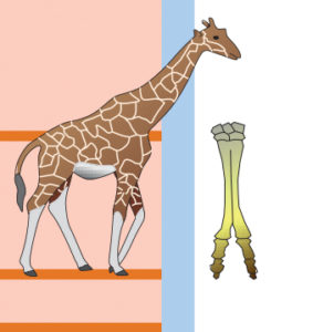 Illustration de girafe