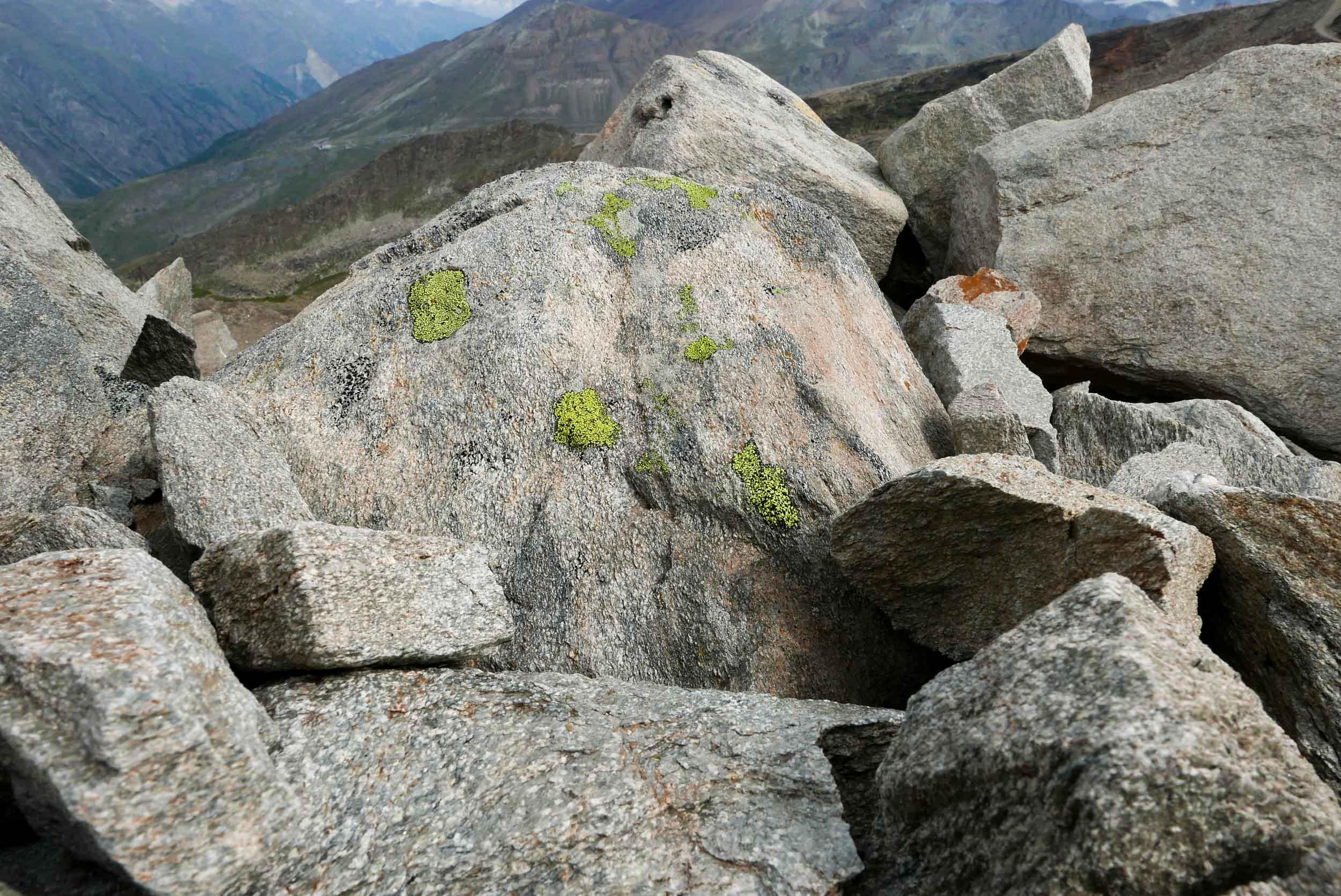 Du lichen rhizocarpon geographicum accroché à un rocher.