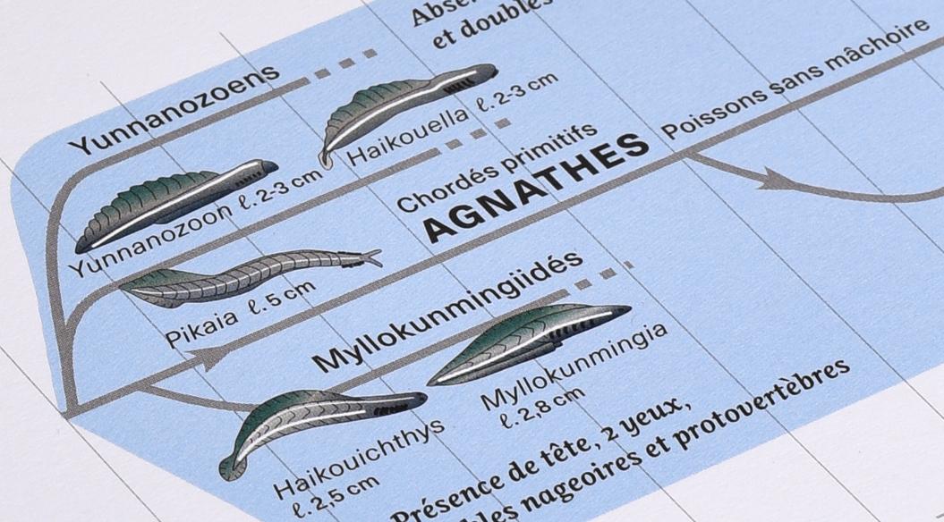 planche 1 de l'Atlas des vertébrés, présentant les agnathes.