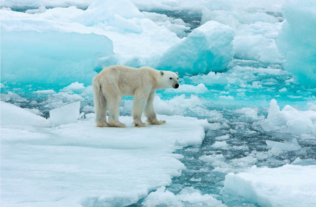 Photo d'un ours polaire sur un iceberg, entouré de morceaux de glace.