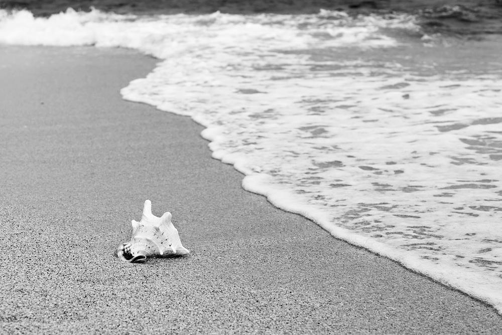 Coquillage sur une plage