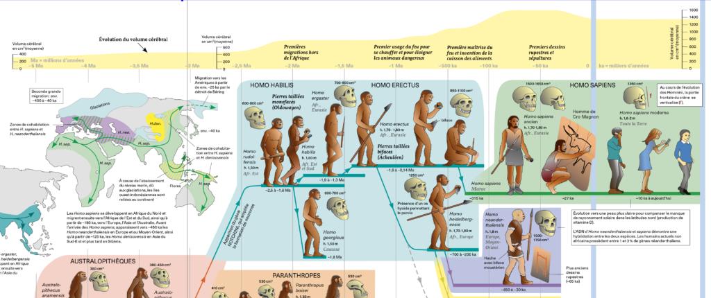 Illustration représentant l'évolution de l'être humain